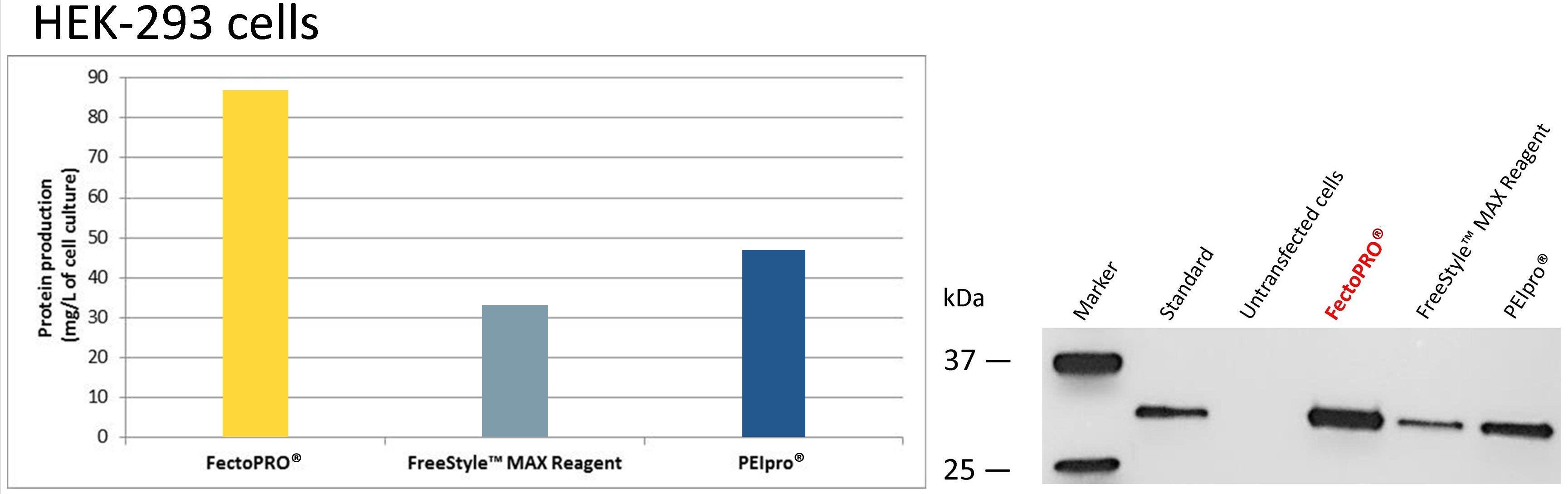 FectoPRO - HEK-293F cells
