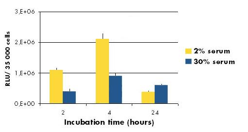 jetPEI-HUVEC - Incubation with serum