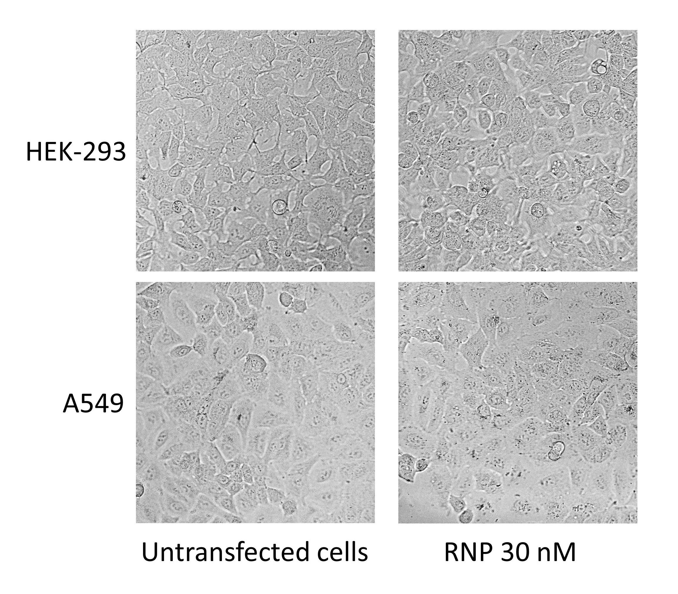 jetCRISPR - Cell Viability
