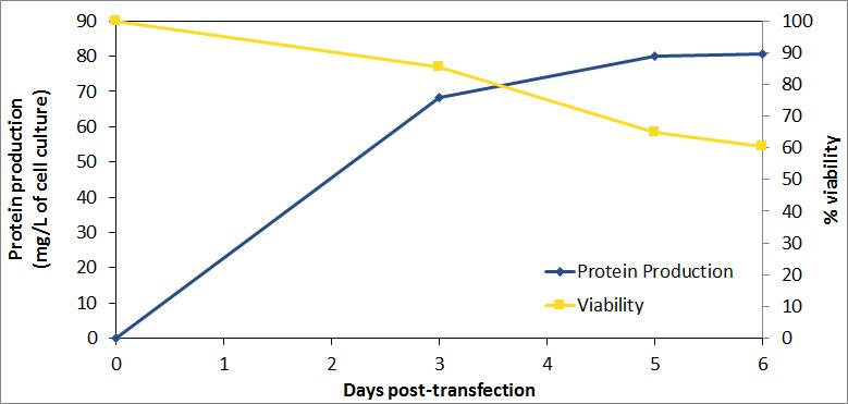 FectoPRO - Production + viability in HEK-293