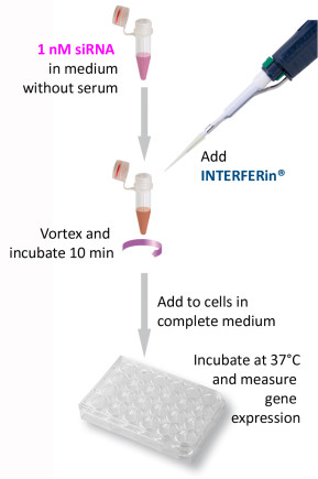 INTERFERin - Protocol