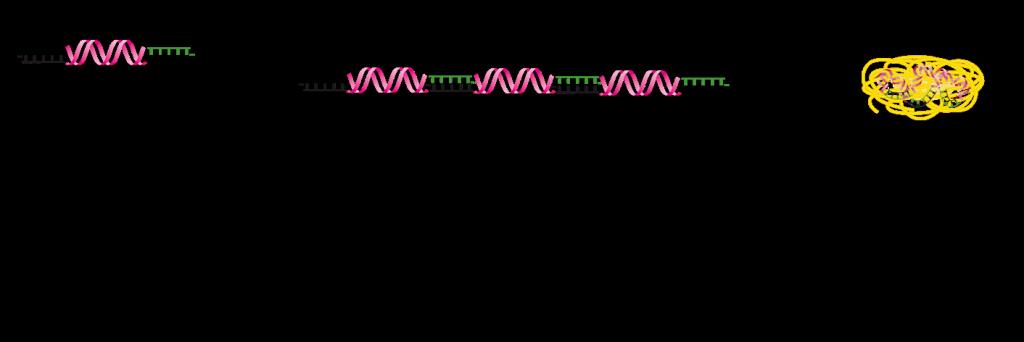 Mechanism STICKY SIRNA