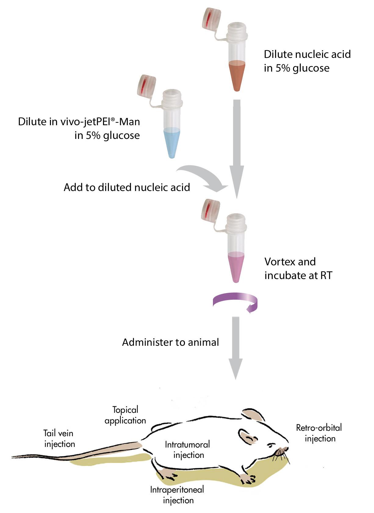 in vivo-jetPEI®-Man - Polyplus-transfection