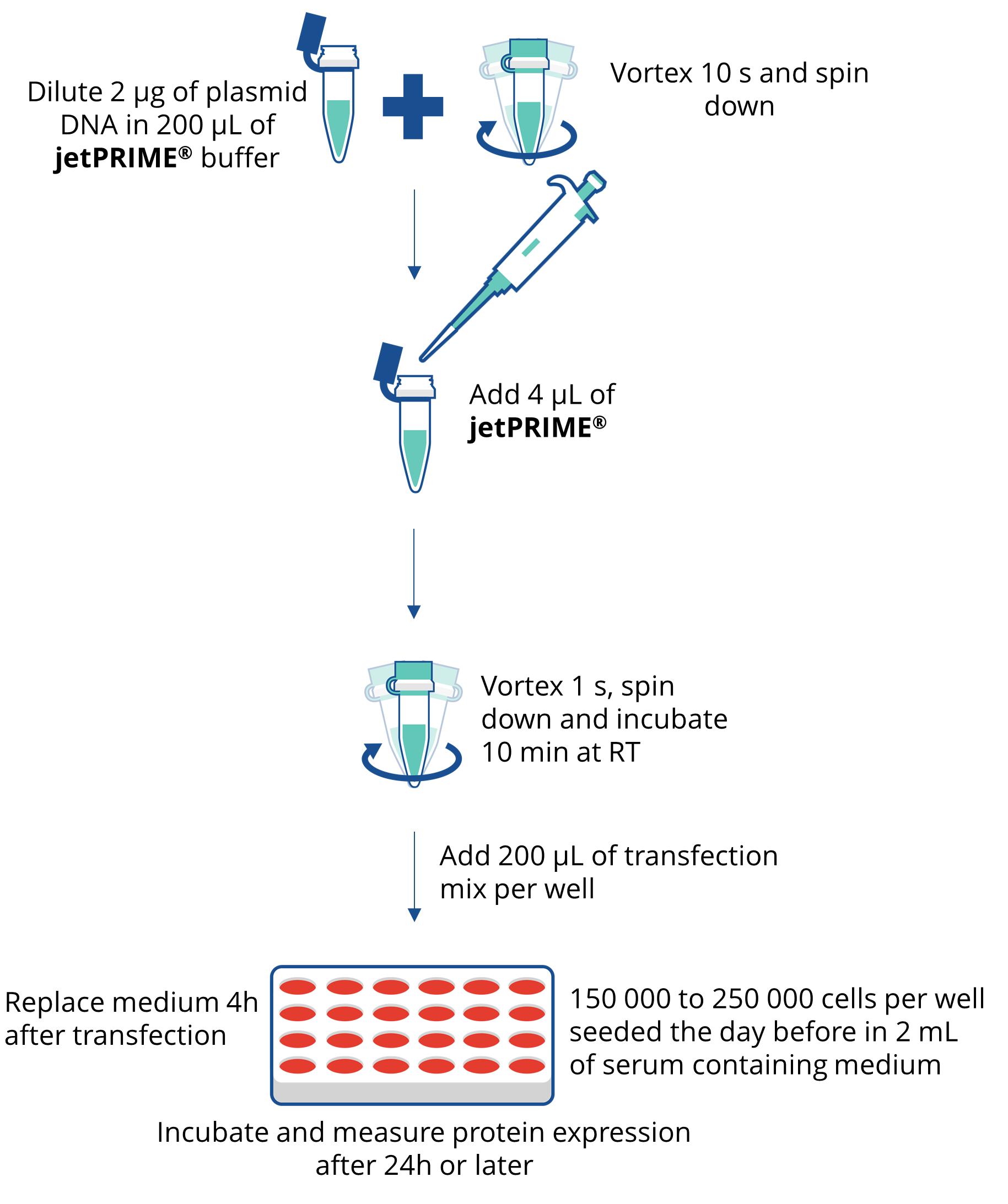 jetPRIME - protocol