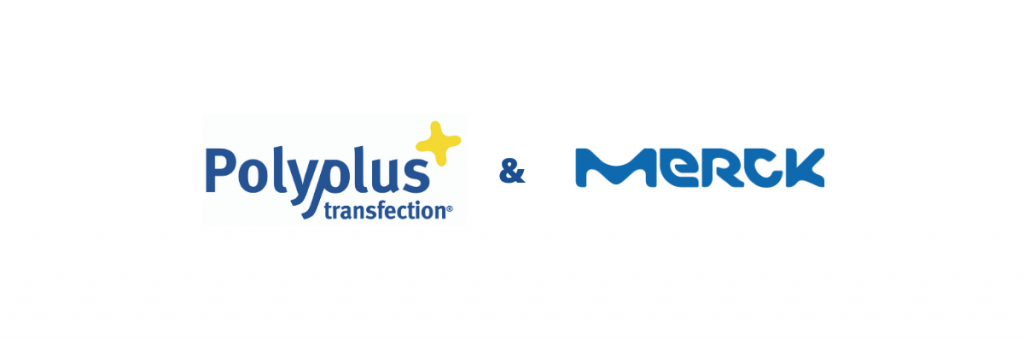 Polyplus-transfection and Merck