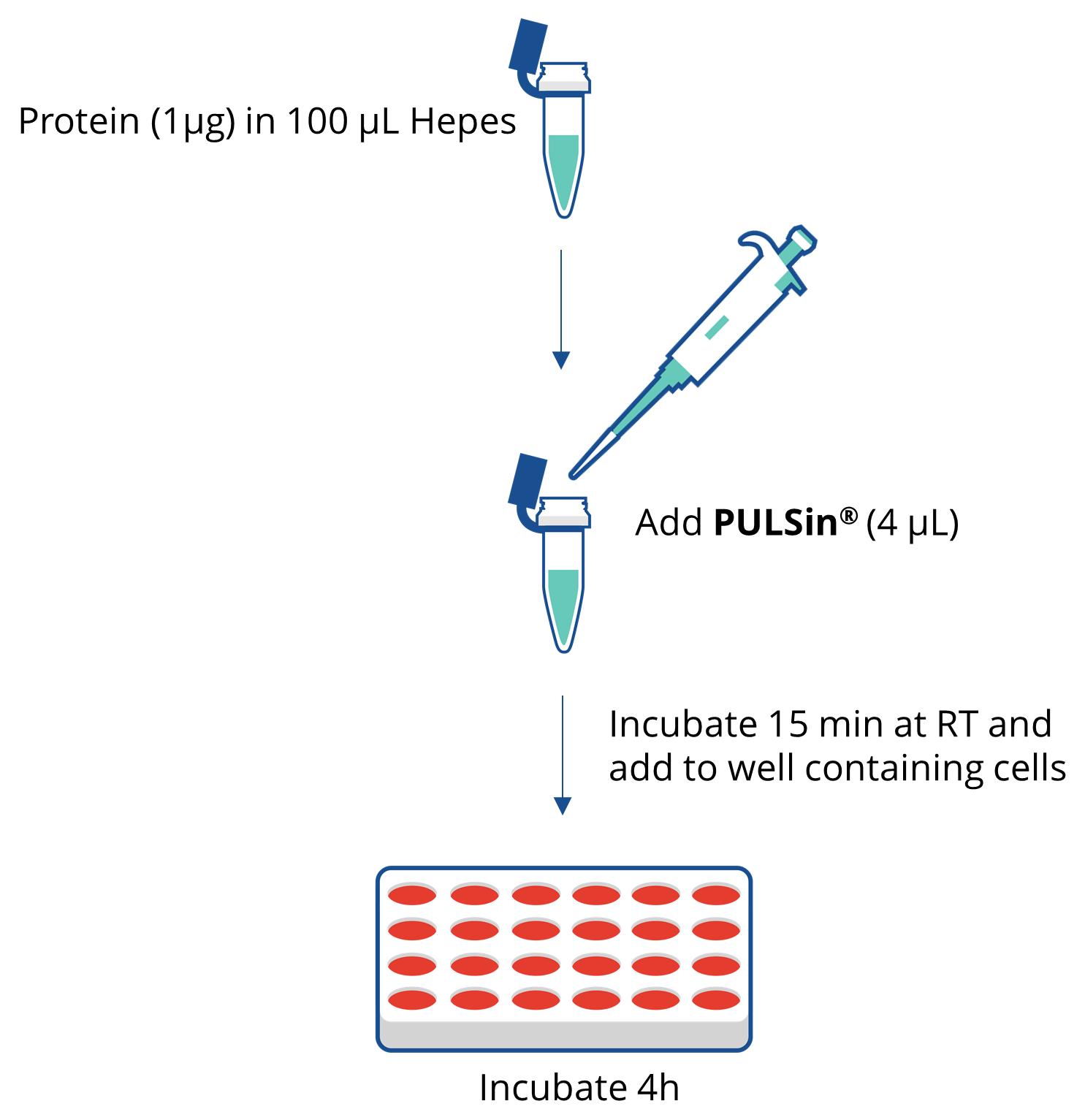 PULSin - Protocol