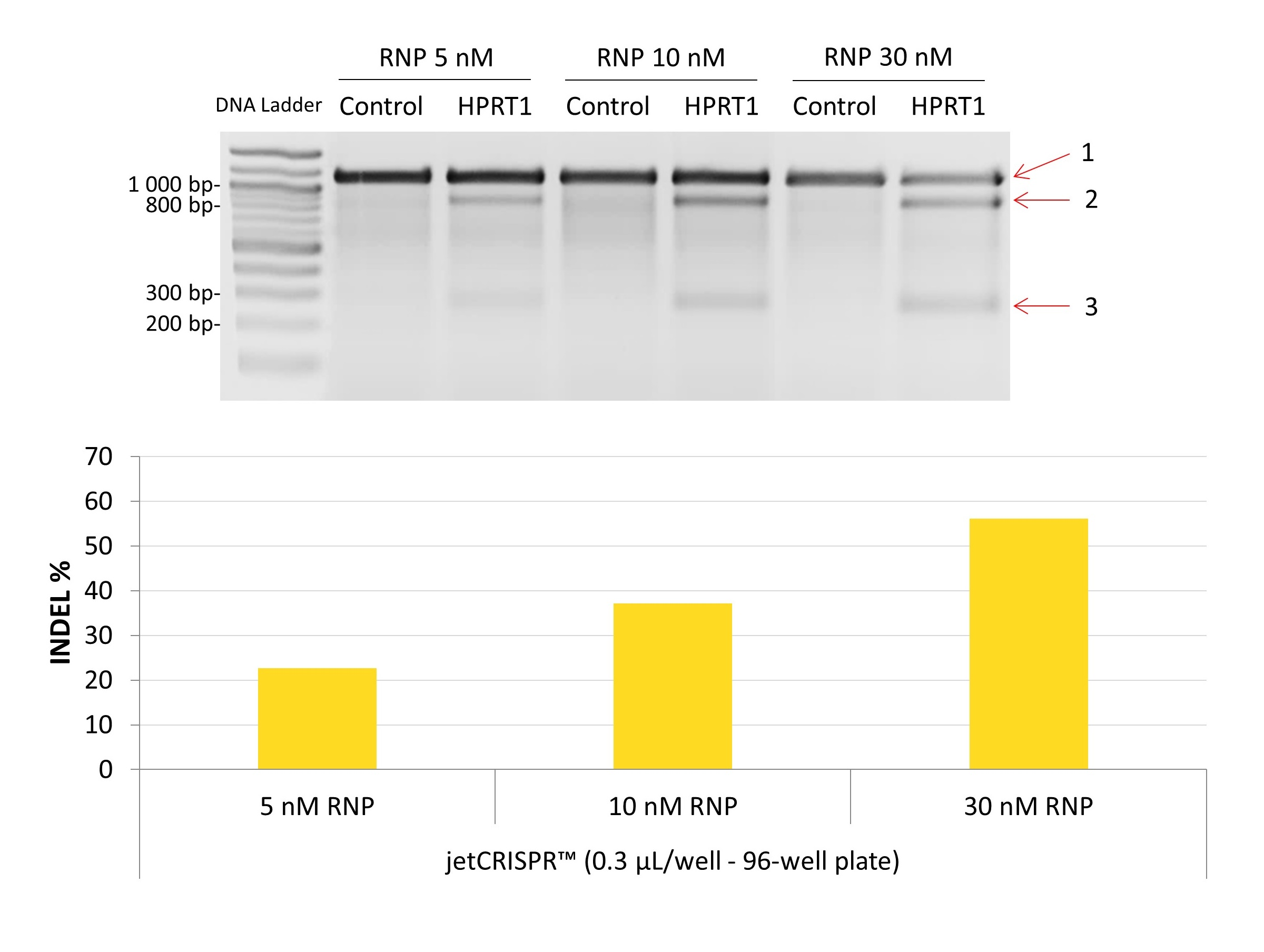 jetCRISPR - Genome editing efficiency