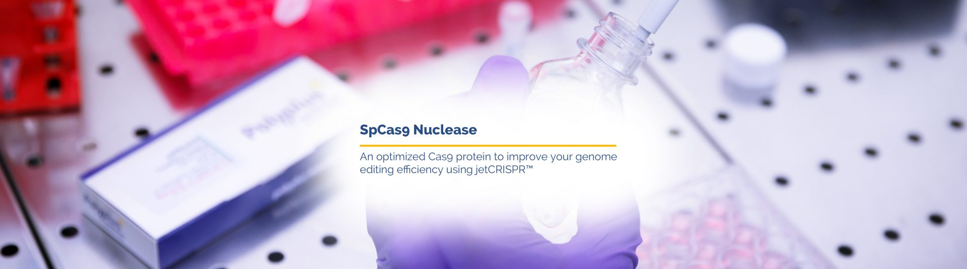 SpCas9 Nuclease - Product image - Polyplus-transfection