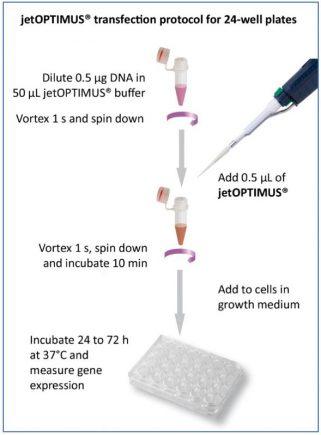 Protocole de transfection jetOPTIMUS