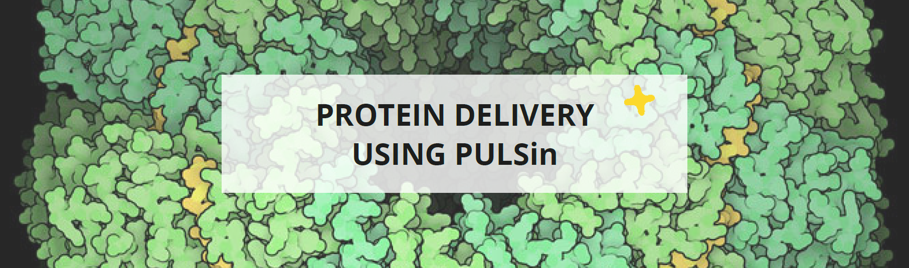 Protein delivery using PULSin