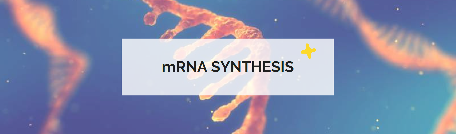 mRNA synthesis