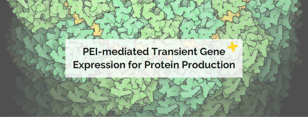 pei protein production
