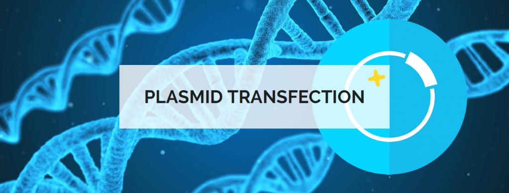 plasmid transfection